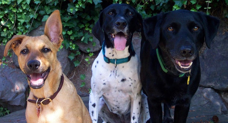 How Can You Find Out What Breed Your Dog Is?