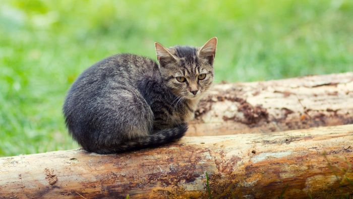 What Are the Common Causes of an Abscess on Cats?