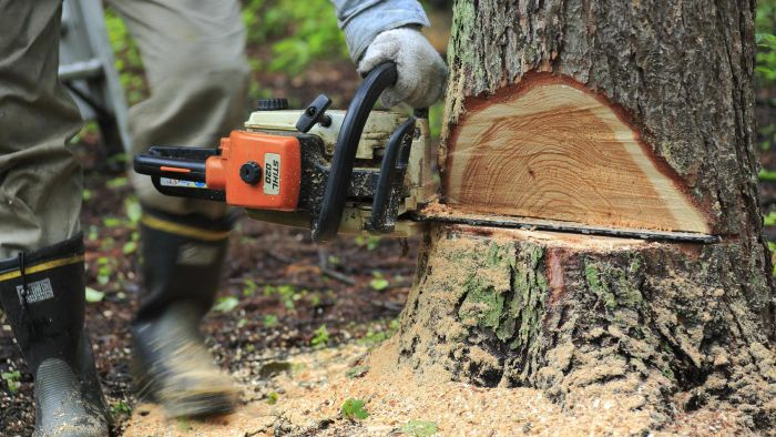 What Organizations Offer Chainsaw Training Courses?