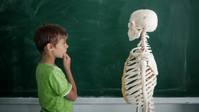 Where Can You Find Images and Diagrams of a Human Skeleton?