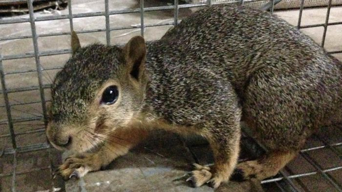 What Is the Best Bait to Use for a Squirrel Trap?