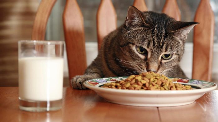 When Should You Make a Feeding Chart for Your Cat?