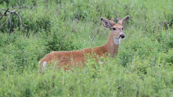 What Is the State Record for the Largest Whitetail Buck?