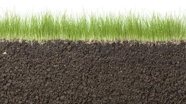 When Should You Plant Grass Seed?