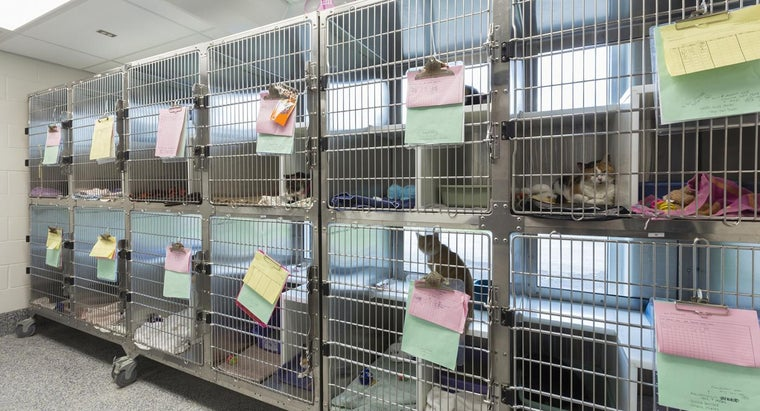 What Are Some Characteristics of a Good Animal Rescue Shelter?
