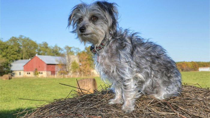 What Is a Home Remedy for Skin Mites on Dogs?