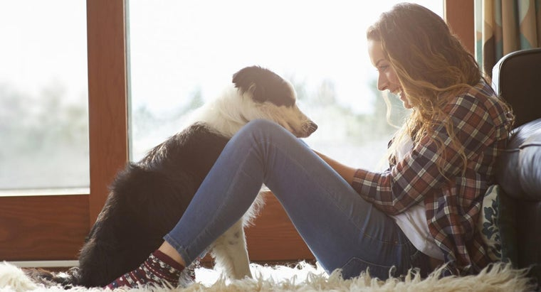 What Are Symptoms of Staph Infection in Dogs?