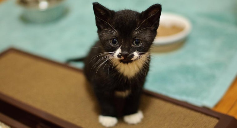 What Are Some Good Black-and-White Kitten Names?