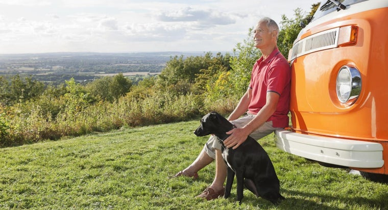How Do You Determine the Life Expectancy for Dogs?