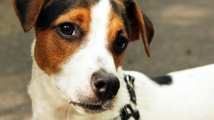 How Many Breeds of Terrier Dogs Are There?