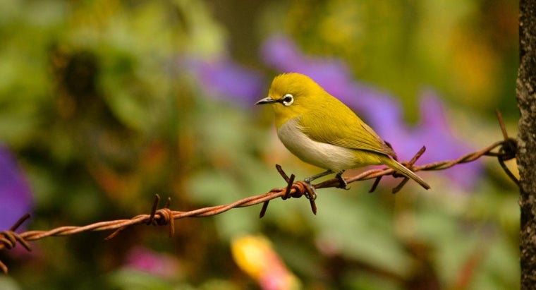 Where Can You Find a List of Birds?