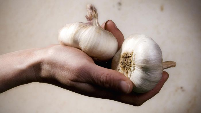 Do Garlic Tablets Help With Cholesterol?