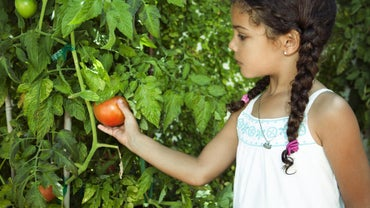 How Do You Plant Tomato Plants?