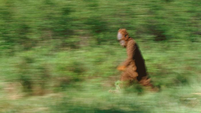 What Are Some of the Most Famous Bigfoot Sightings in New York?
