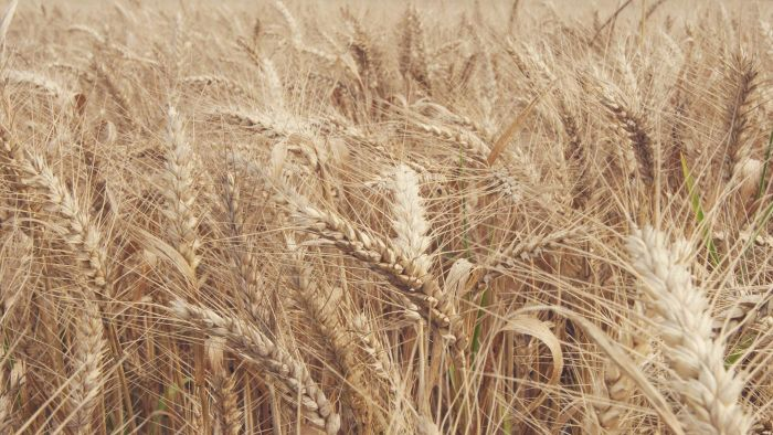 What Are Some Wheat-Free Foods?