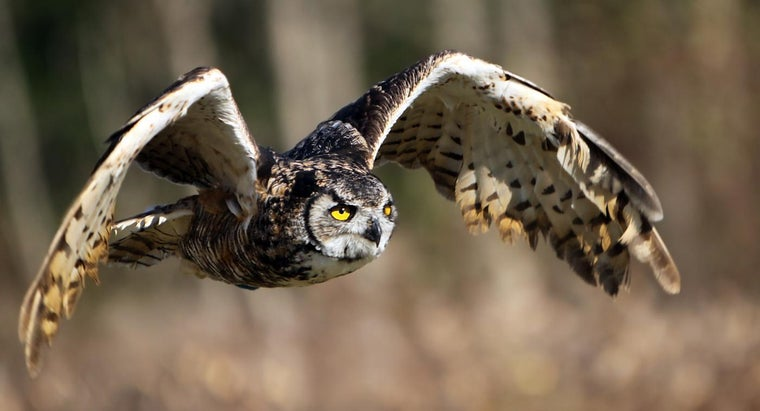 What Is the Usual Habitat of the Great Horned Owl?