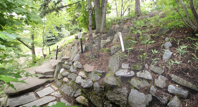 What Are Some Easy Ways to Incorporate Rocks in Landscape Design?