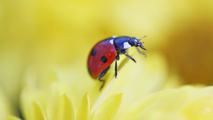 How do you identify beetles?