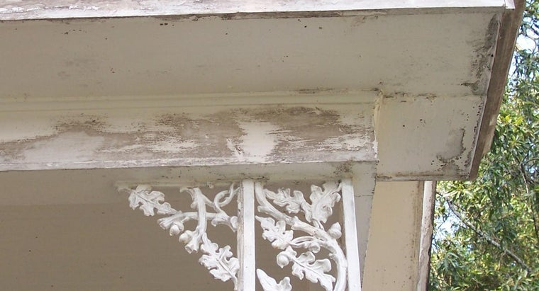 What Is the Difference Between Mold and Mildew?