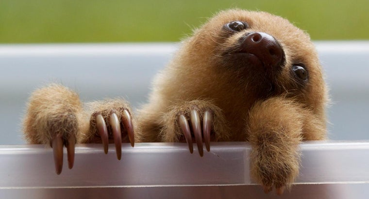What Do Sloths Eat?