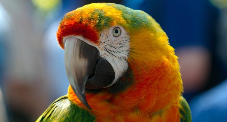 Are There Shelters for Parrots?