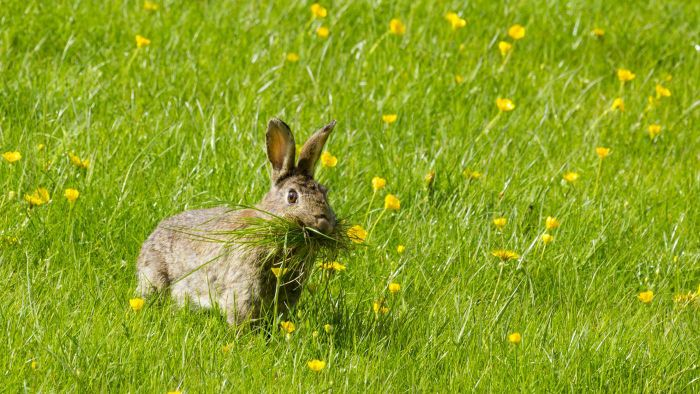What Foods Do Wild Rabbits Like to Eat?