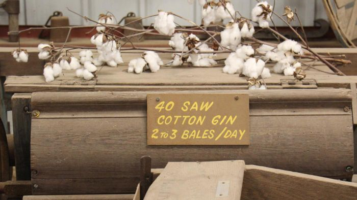 What Did the Cotton Gin Do?