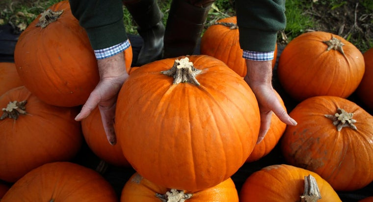 How Do You Preserve a Pumpkin?