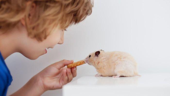 What Are Some Popular Hamster Games?