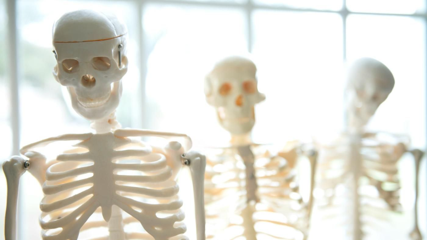 What Are The Functions Of The Human Skeleton Reference