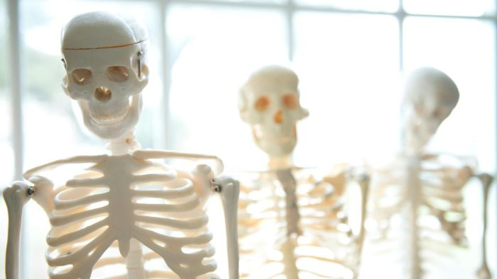 What Are the Functions of the Human Skeleton?