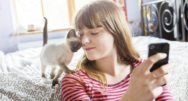 Where Can You Watch Videos of Cats and Kittens Online?