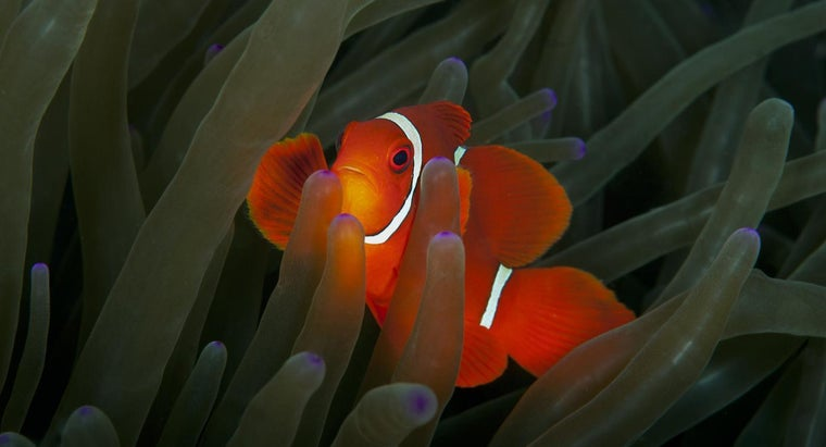 Where Can a Kid Get Clown Fish Facts?