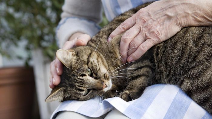 What Are the Symptoms of a Dying Cat?
