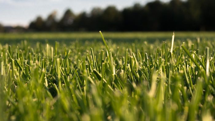 Where Can You Buy Lesco Lawn Fertilizer Products?