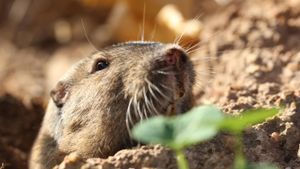 What Is a Humane Way to Get Rid of Gophers in Your Yard?