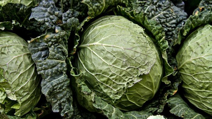 What Are Some Crock Pot Cabbage Recipes?