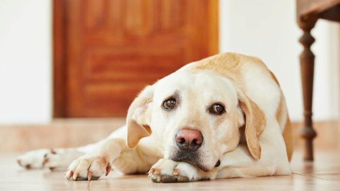 How Can You Tell If Your Dog Has Diabetes?