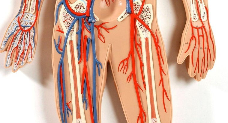 How Do You Read a Femoral Artery Illustration?