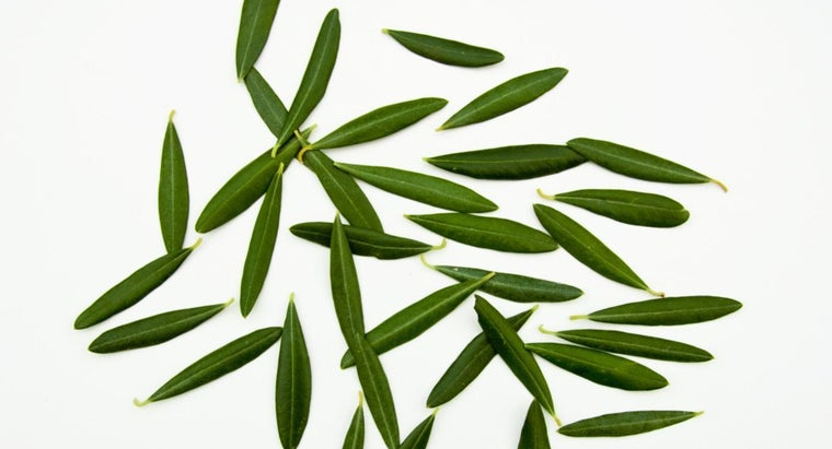 What Are the Benefits of Olive Leaf Extract?