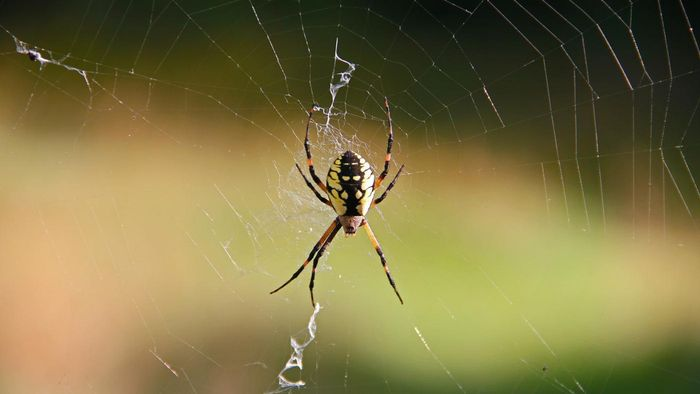 What Is the Treatment for Spider Bites?