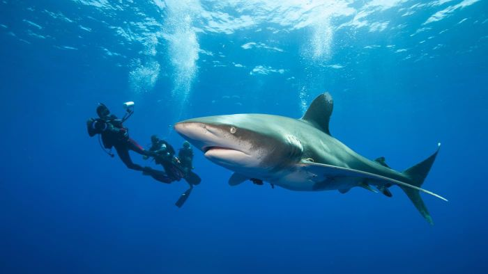What are some different types of sharks?