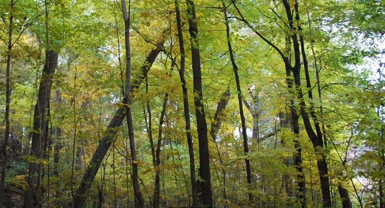What Are Some General Facts About Forests?
