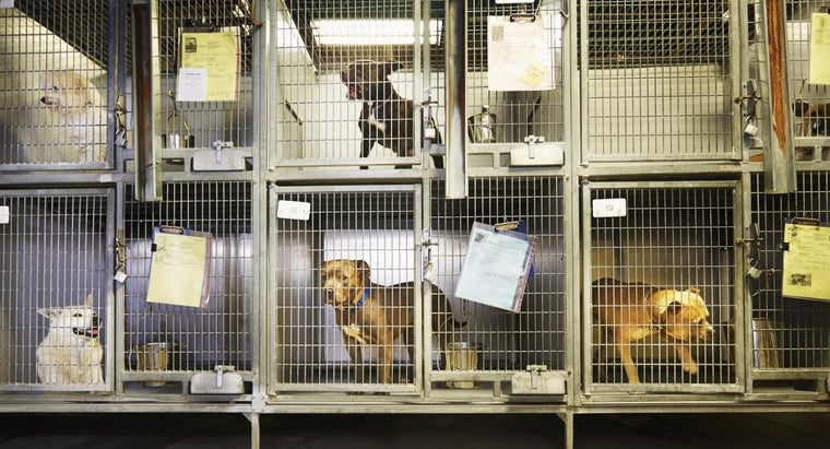 Where Is There an Animal Shelter Located Near Florence, Alabama?