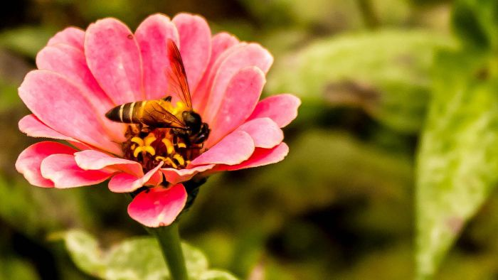Are There Different Types of Honey Bees?