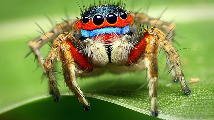 What are some amazing facts about spiders?