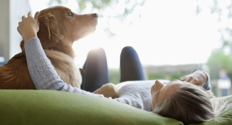 Can Dogs Have Seizures?