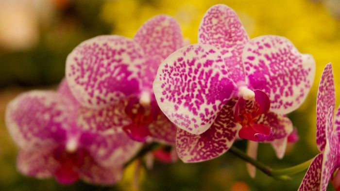 What are the requirements for growing orchids indoors?