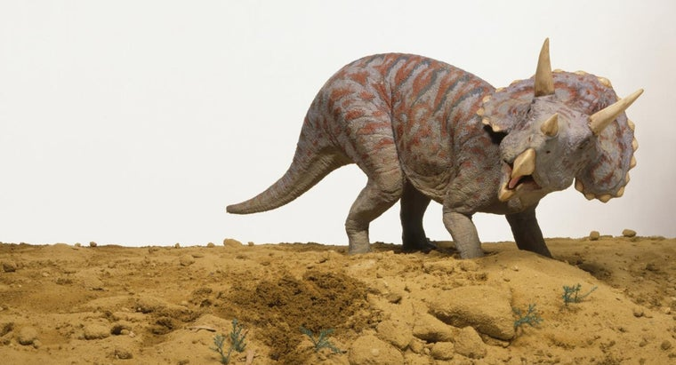 What Are Some Interesting Facts About the Triceratops for Kids to Learn?