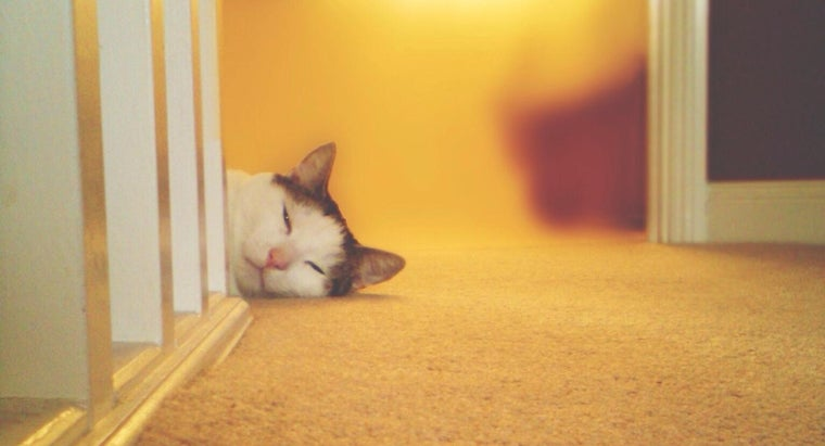 What Are Some Recommended Ways to Relieve Constipation in Cats?
